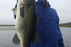 bass-523