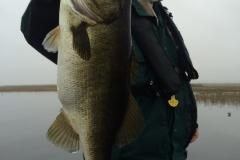 bass-530