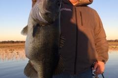 bass-538