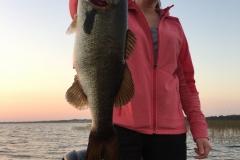 bass-567